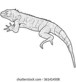Lizard is goanna silhouette on a white background. Vector illustration.