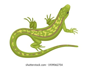 Lizard, a green small reptile, a species of common lizard. Vector animal isolated on white background, cartoon illustration