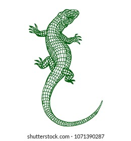 Lizard reptile line art hand drawn vector tattoo sketch ink illustration on white background