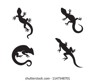 Lizard vector, design, animal, and reptile, gecko