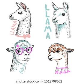 Llama, Alpaka in pink glasses. Cartoon doodle llama character vector design. Drawn llama head portrait sticker, patch badg Template. Close-up. Clip art. Hand Painting. Ink. Line art