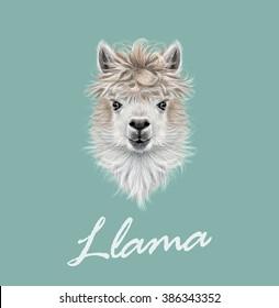 Llama animal portrait. Vector illustrated portrait of Llama or Alpaca on blue background.
