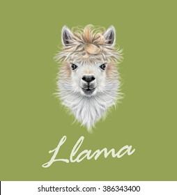 Llama animal portrait. Vector illustrated portrait of Llama or Alpaca on green background.