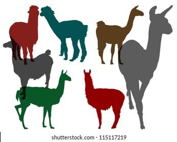 llamas collection - vector in color