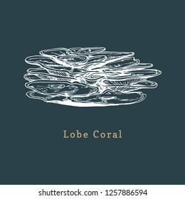 Lobe coral vector illustration. Drawing of sea polyp on black background.