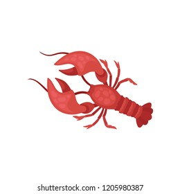 Lobster with bright red shell and long antennae. Crayfish with large claws. Marine creature. Sea animal. Flat vector design
