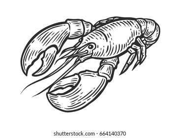 Lobster, omar, cancer seafood nature ocean aquatic underwater vector. Hand drawn marine engraving illustration on white background. Sea animal