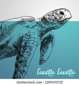 Loggerhead sea turtle, Caretta caretta, vector illustration eps 10