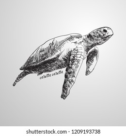 Loggerhead sea turtle, Caretta caretta, vector illustration eps 10
