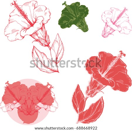 Logo Pink Hibiscus Flowers Drawing Sketch Stock Vector Royalty Free