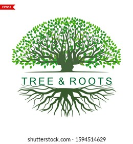 Logo Trees and roots, tree with a round shape with beautiful green leaves. Mangrove trees with white background, vector