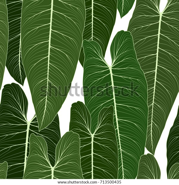 Long Big Tropical Leaves Sharp Tips Stock Vector Royalty Free 713500435 Download transparent tropical leaves png for free on pngkey.com. shutterstock