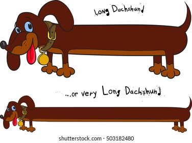 Long cheerful brown dachshund in two positions on white background.