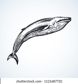 Long cute atlantic minke breach on light aqua backdrop. Freehand outline dark ink hand drawn zoo pictogram logotype emblem sketchy in art retro engraved style pen on paper space for text. Side view