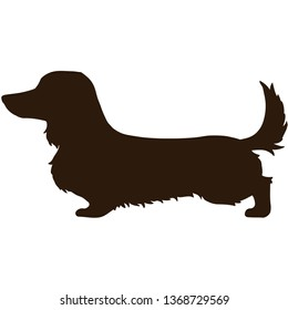Long haired Dachshund side silhouette