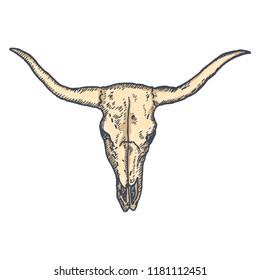 Long Horn Cow Skull hand drawn. Vector illustration