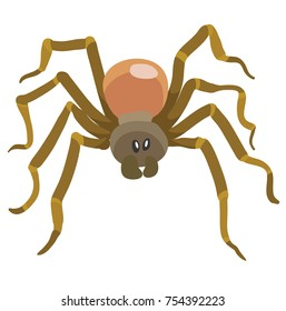 long legged brown spider