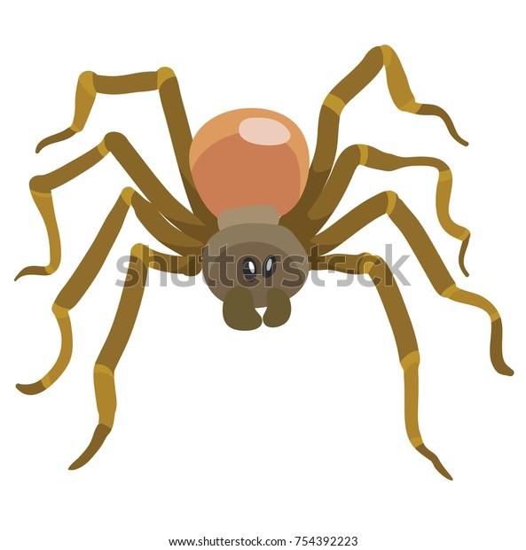 long legged brown spider