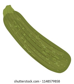 Long vegetable in green color with rough skin layers, gripping zucchini icon
