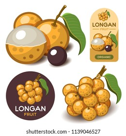 Longan tropical fruit isolated vector on white background