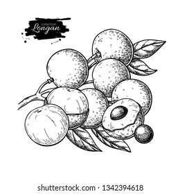 Longan vector drawing. Hand drawn tropical fruit illustration. Engraved summer fruit. Whole and sliced objects with leaves. Botanical vintage sketch for label, juice packaging design, menu