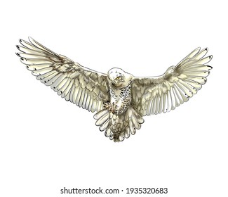 Long-eared Owl, Eagle owl, Polar owl in flight from a splash of watercolor, colored drawing, realistic. Vector illustration of paints