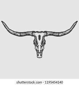Longhorn skull vector illustration