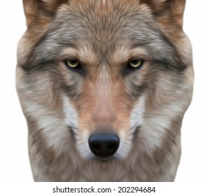 A look straight into your soul of a severe wolf female. Menacing expression of the european wolf, very beautiful animal and extremely dangerous beast. Amazing vector portrait in oil painting style.