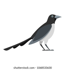 Looking magpie icon. Flat illustration of looking magpie vector icon for web