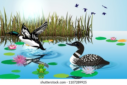 Loon swimming in river