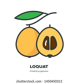 Loquat fruit icon, outline with color fill style vector illustration, half and whole fruit with leaf