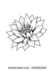 Lotus beautiful vector drawing tattoo illustration.
