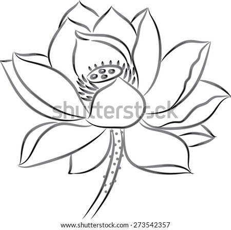 Lotus Flower Black White Stock Vector (Royalty Free) 273542357 ...