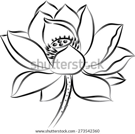 Lotus Flower Black White Stock Vector (Royalty Free) 273542360 ...