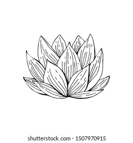 Lotus flower drawn in black and white line in vector. Hand drawn illustration. Nelumbo. Botanical illustration in vintage style. Isolated object on white background.