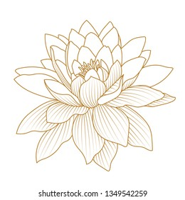 lotus flower. Floral botanical flower. Isolated illustration element. Full name of the plant: lotus. wildflower for background, texture, wrapper pattern, frame or border.