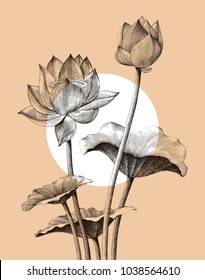 Lotus flower hand drawing vintage engraving style
