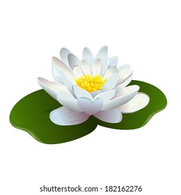 lotus flower isolated. vector illustration