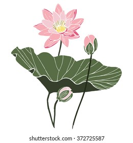 Lotus flower with leaf and two buds isolated vector design. Botanical composition on white paper