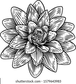 A lotus flower water lilly in a woodcut engraved etching retro style