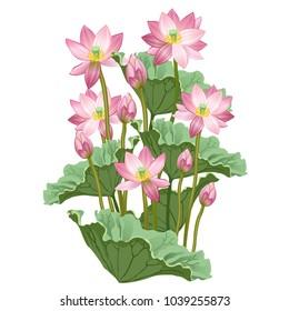 Lotus flowers and leaves. Hand drawn vector illustration of lotus plant (Nelumbo nucifera) on white background.