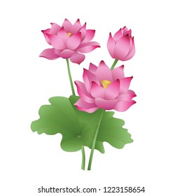 Lotus flowers on a white background, the stages of bud opening, a beautiful flower, an aquatic plant. Composition of pink lotus flower with green leaves in hand drawn style pastel colors. Vector