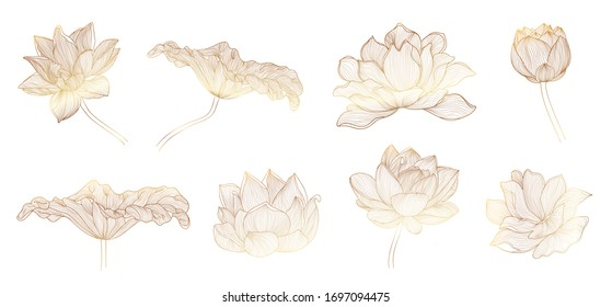 Lotus hand drawn vector set, Collection of lotus flowers for logo, luxury wedding  invitation, cover, packaging, pattern and background template.