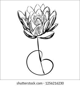 Lotus. Ink drawing. Graphics.