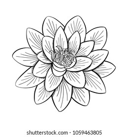Lotus Drawing Images Stock Photos Vectors Shutterstock