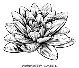 A lotus lily water flower in a vintage woodcut engraved etching style