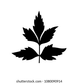 Lovage (levisticum officinale), perennial plant