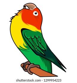 lovebird is on wood