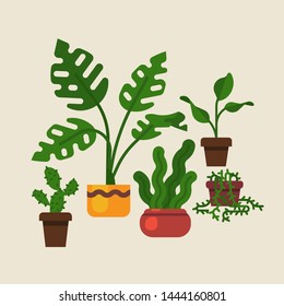 Lovely flat design vector domestic plants featuring swiss cheese plant, \n sansevieria, cactus and more