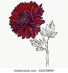 Lovely Isolated big Red Flower grafical paint